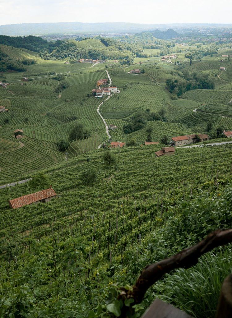 A valley filled with green vineyards located along northern Italy's Prosecco Road