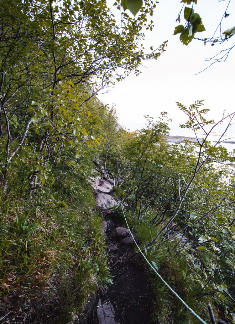 A rocky and narrow hiking trail surrounded by trees in the Lofoten Islands