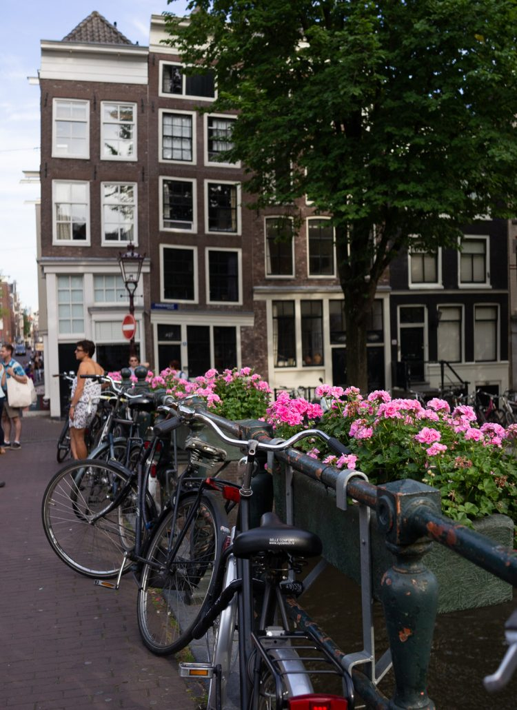 Pink flowers and bikes along the canals of Amsterdam