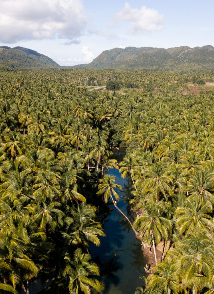 Drone shot of a river surrounded by coconut palm trees