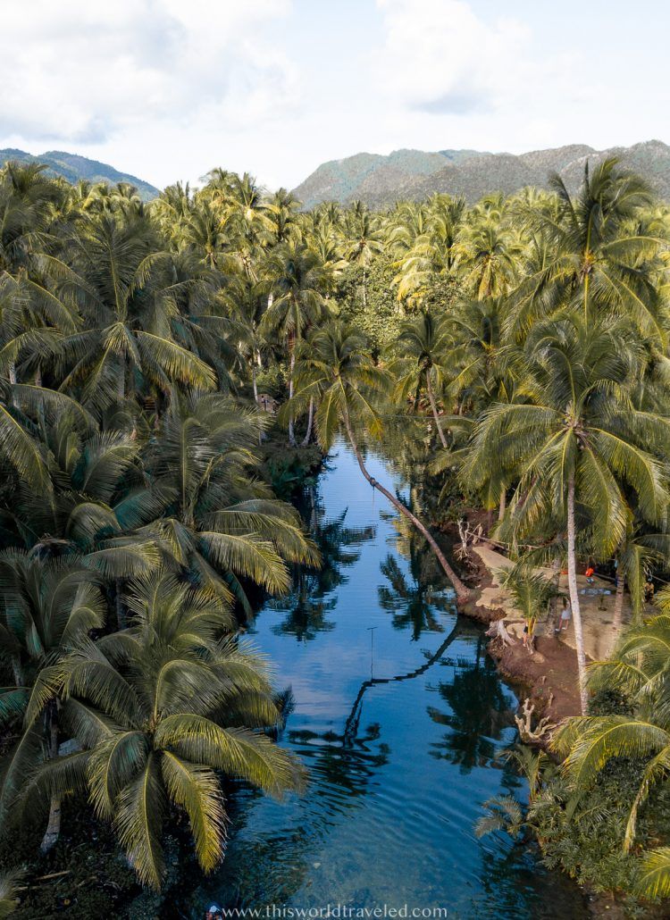 Aerial view of the Maasin River surrounded by coconut palm trees and a tree that juts out over the river