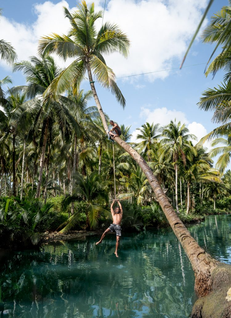 Guy swinging from a rope attached to a palm tree at the Maasin River on the island of Siargao in the Philippines