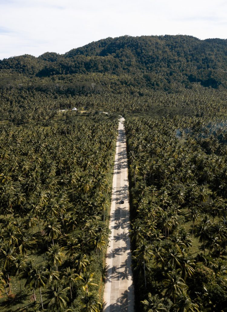 A two lane road lined with coconut palm trees located in Siargao in the Philippines