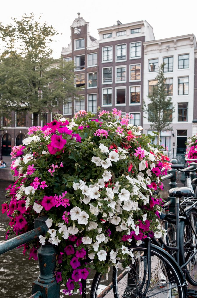 Pink and white flowers on the bridge on the canal in Amsterdam