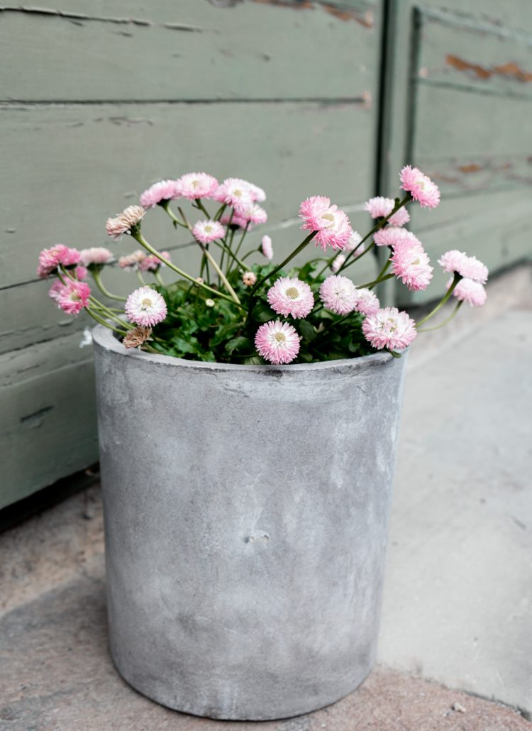 A metal flower pot with light pink flowers