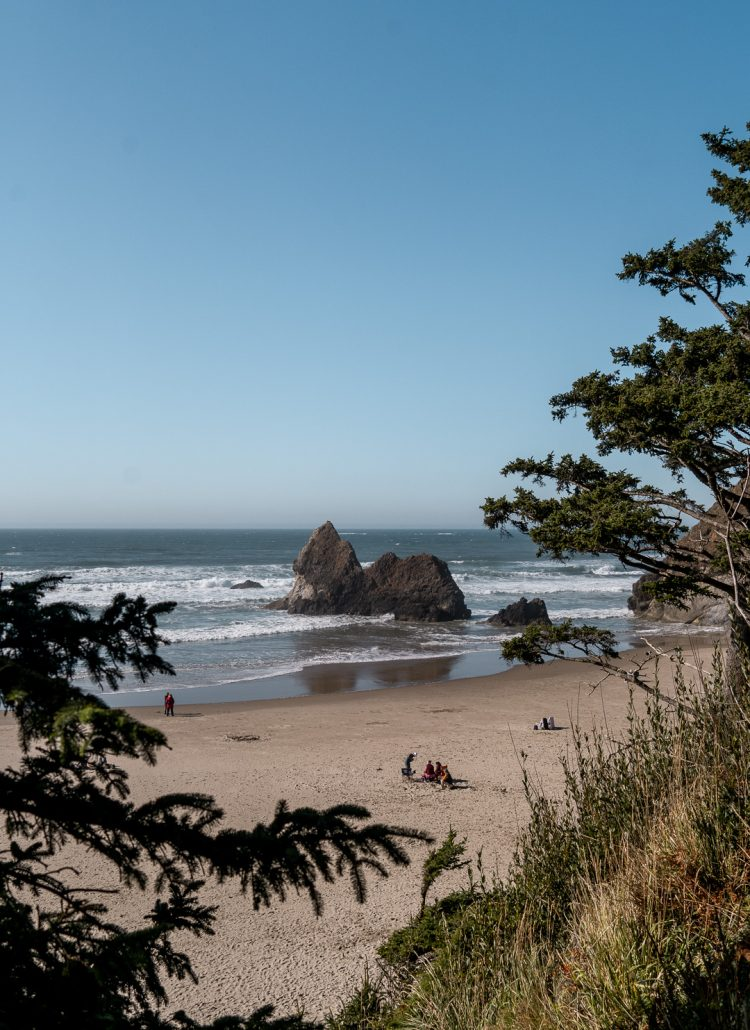 Trees with views of the Pacific ocean along Oregon's northern coast