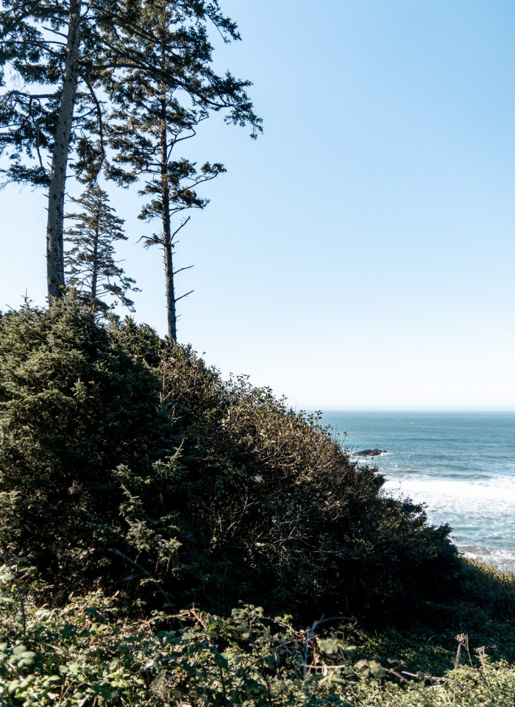 A tall cliff with long, skinny trees in the Pacific Northwest of the US