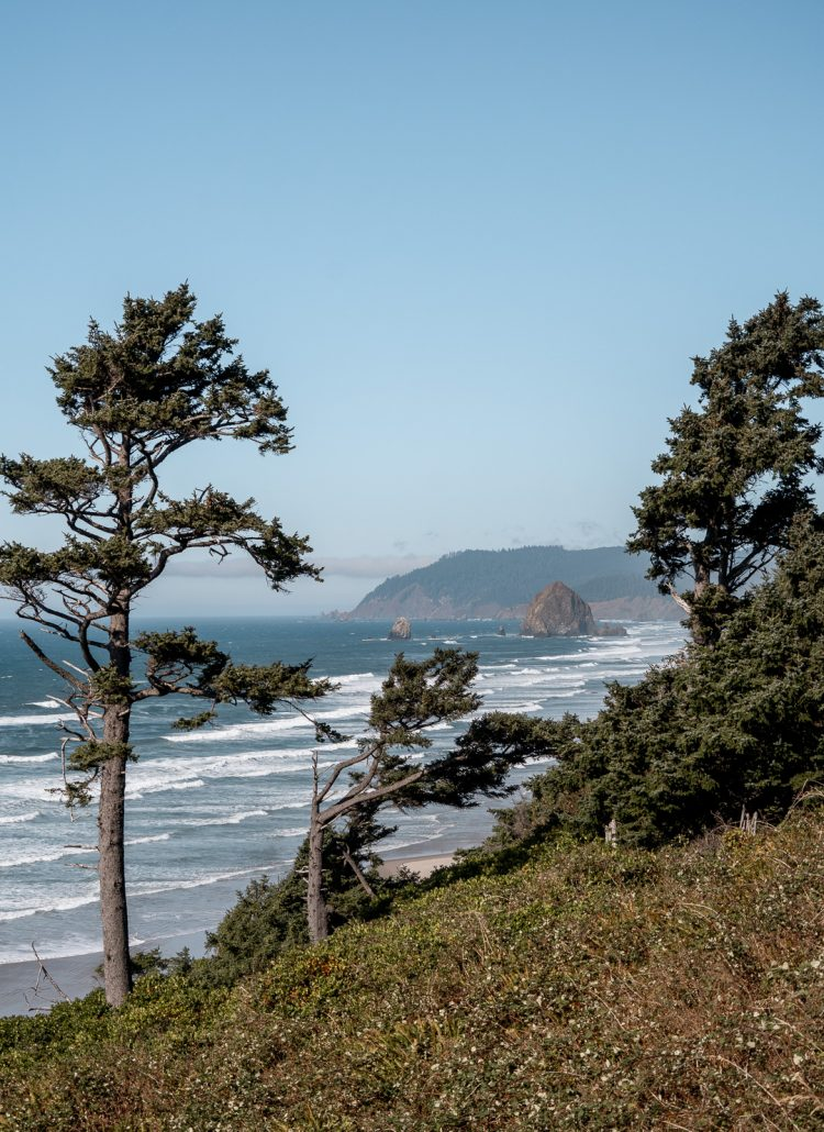 Trees lining the Pacific Northwest coast