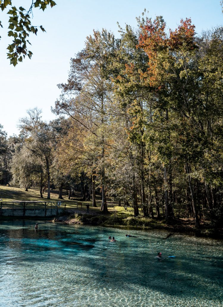 Turquoise water surrounded by cypress trees and a blue sky
